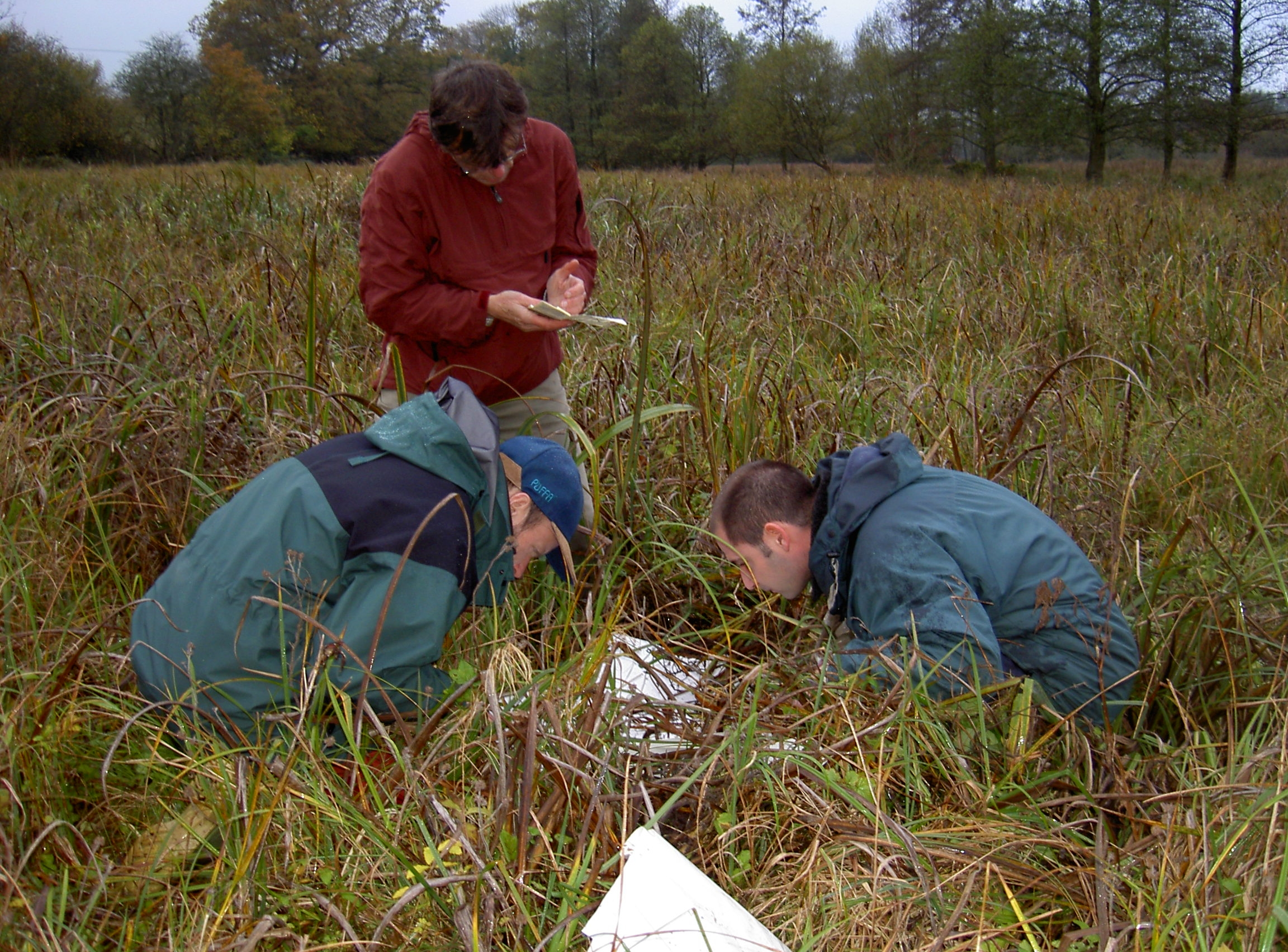 Desmoulin snail survey, Beverley Heath